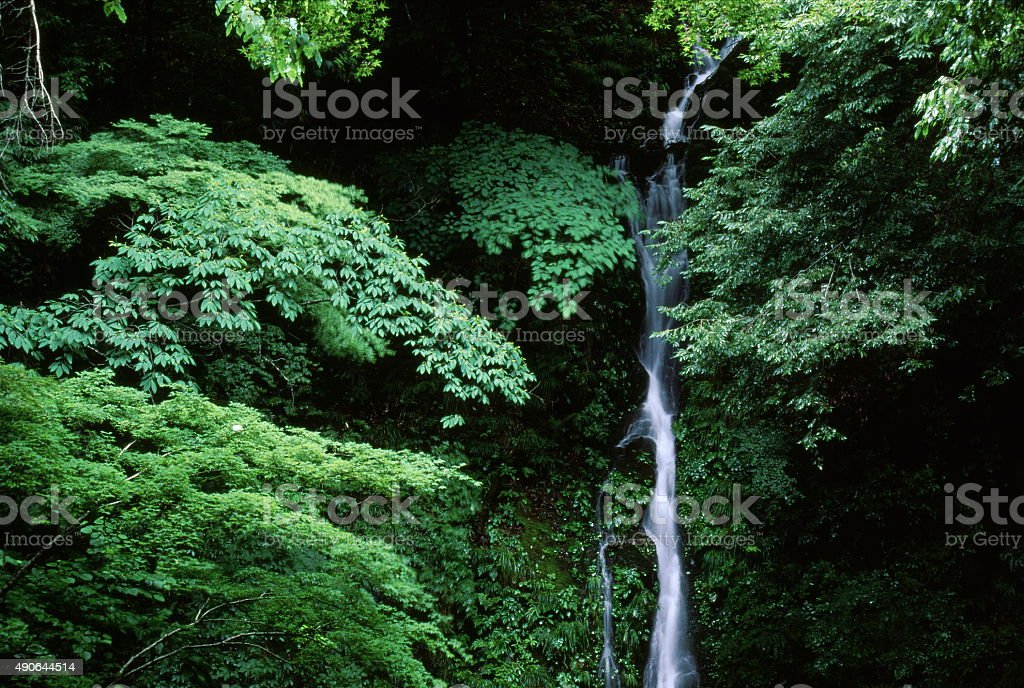 滝の緑 ストックフォト