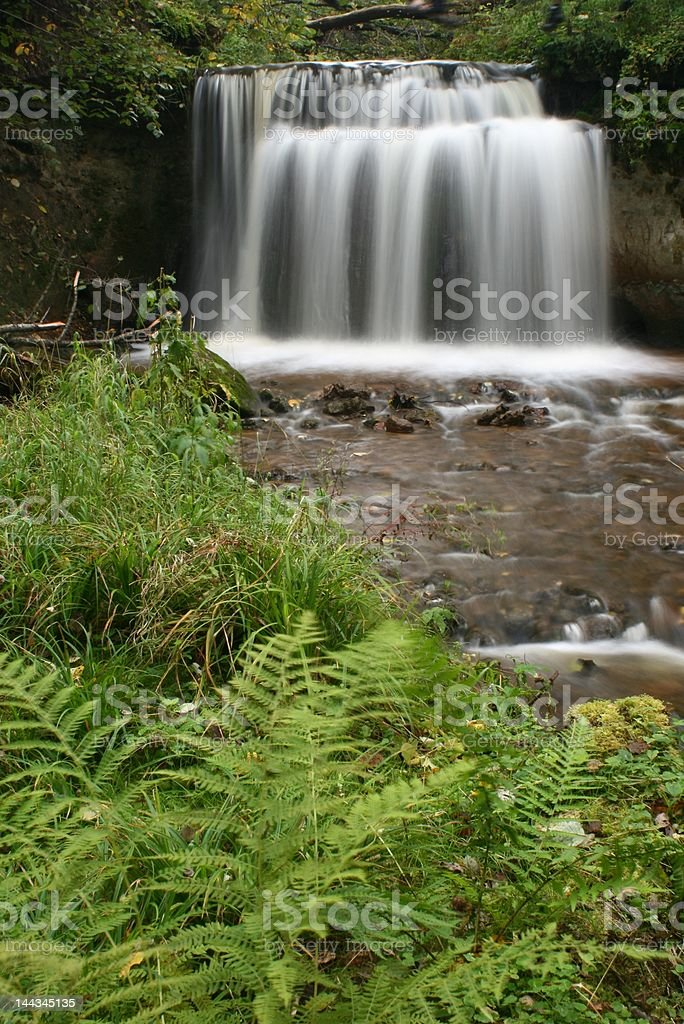 Waterfall and ferns in the forest royalty-free stock photo