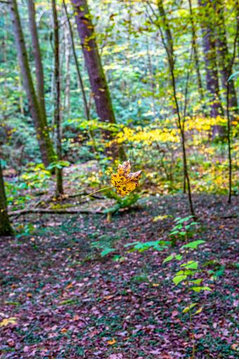 waterfalls and river during fall autumn season , vibrant colors long exposure.