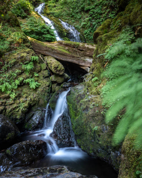 A waterfall flowing through lush green wilderness. Quinault Rainforest - Olympic National Park