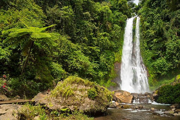 waterfall git git, bali, indonesia - mahroch stock pictures, royalty-free photos & images