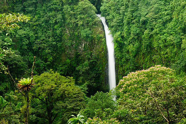 Waterfall in a tropical rainforest stock photo