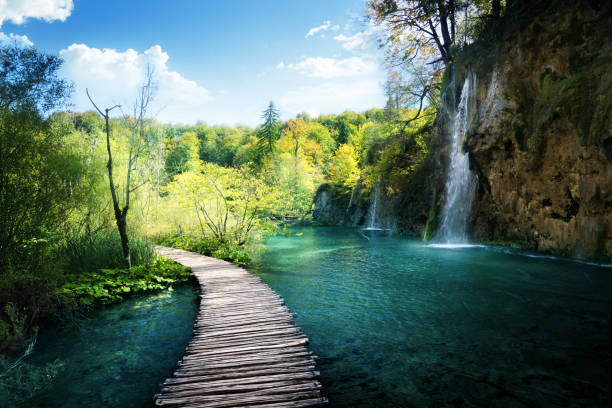 waterfall in forest,  plitvice, croatia - walkway and bridge stock photos and pictures