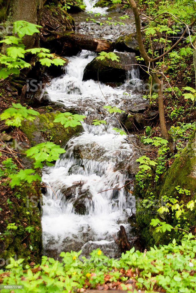 Waterfall in Harz Mountains, Germany zbiór zdjęć royalty-free