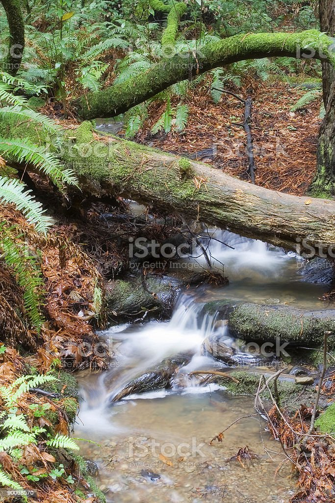 Waterfall in Muir Woods royalty-free stock photo