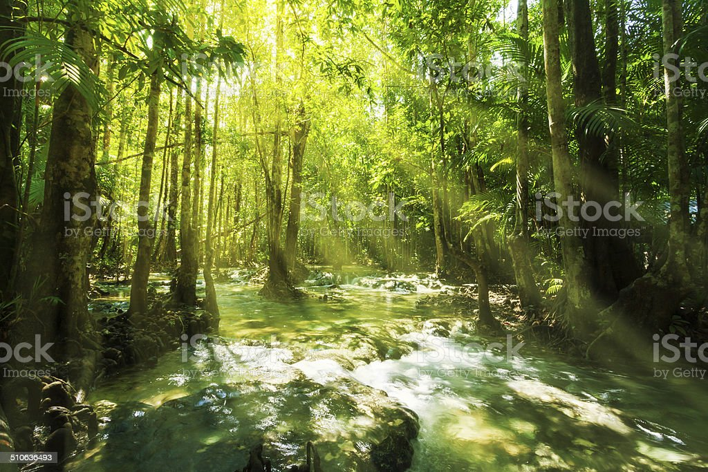 waterfall in rainforest stock photo