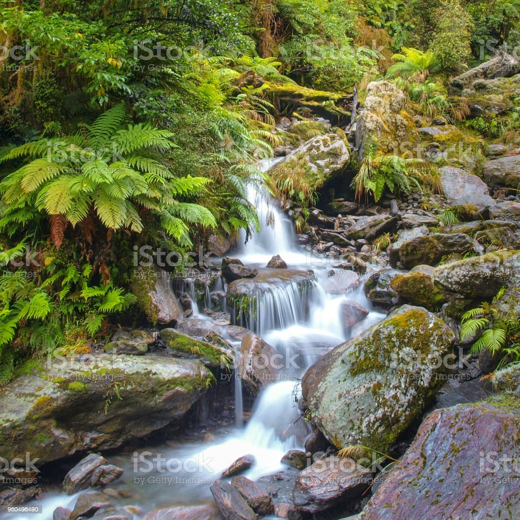 Waterfall in temperate New zealand rain forest stock photo