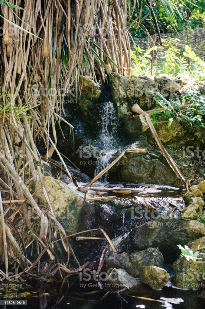 Waterval in het botanische park, Grand Cayman foto