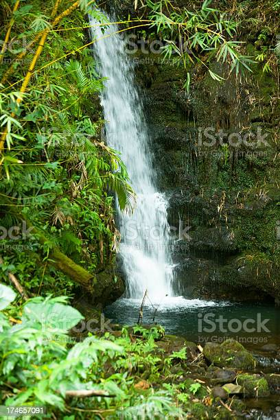 Photo of Waterfall in the forest