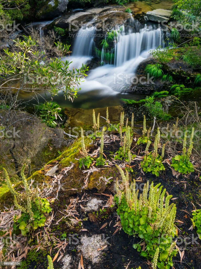Waterfall in the middle of the forest royalty-free 스톡 사진