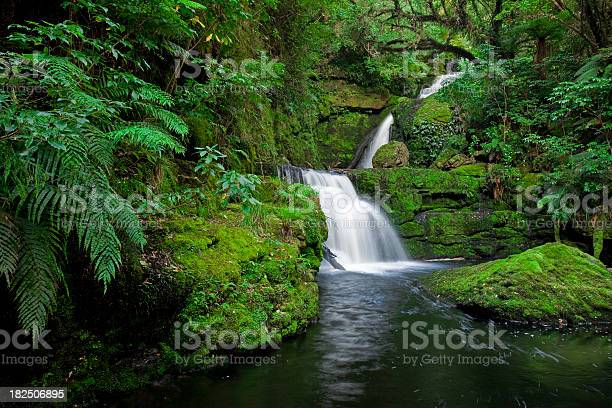 Photo of Waterfall in the rainforest, New Zealand