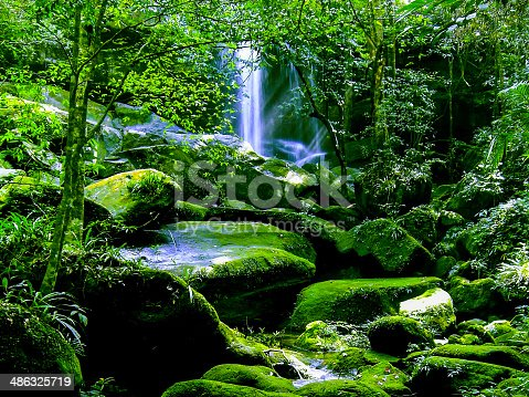 Waterfall in the temperate rain forest
