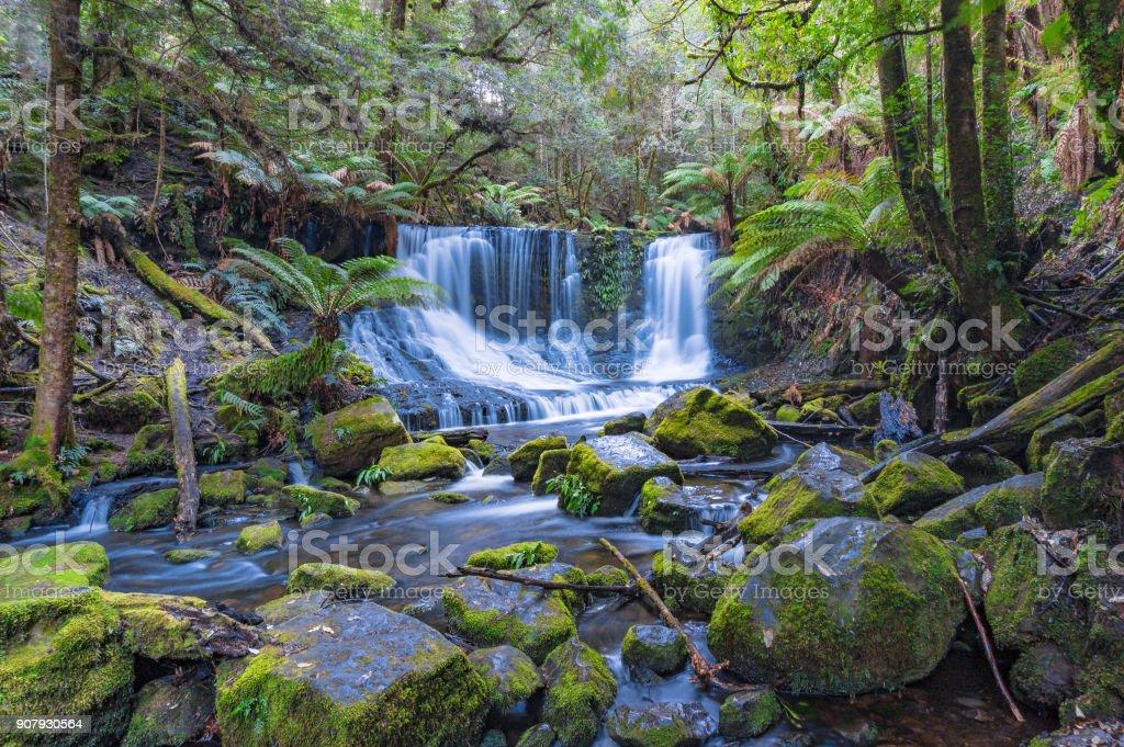 Waterfall in tropical rainforest. Tasmania stock photo