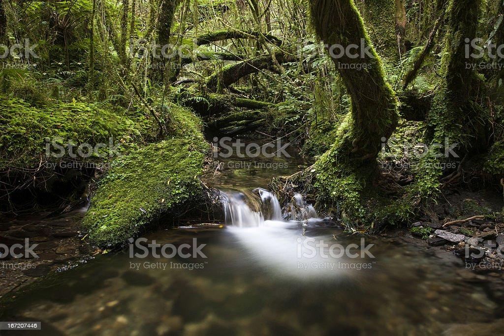 Waterfall into pool, Tai Poutini National Park New Zealand stock photo