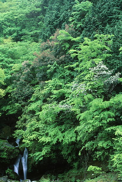 滝の新鮮なグリーン ストックフォト