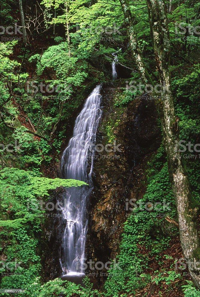 滝の新鮮なグリーン ロイヤリティフリーストックフォト