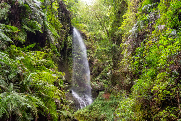 Waterfall of Los Tilos on La Palma stock photo