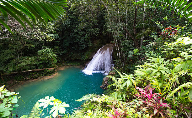waterfall of the blue hole, jamaica - jamaica stock photos and pictures
