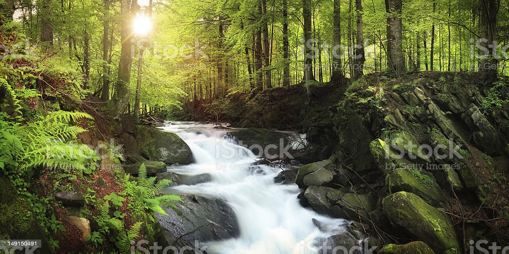 Waterfall on the Mountain Stream located in Misty Forest - Royalty-free Beauty In Nature Stock Photo