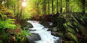 Waterfall on the Mountain Stream in the Forest ~60Mpix Pano