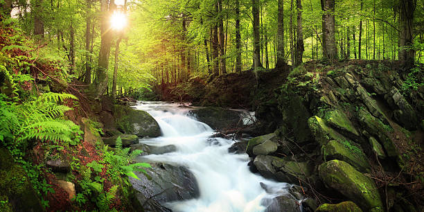 waterfall on the mountain stream located in misty forest - river stock photos and pictures