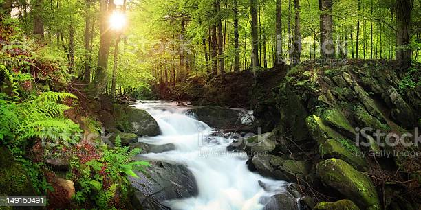 Photo of Waterfall on the Mountain Stream located in Misty Forest