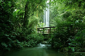 """""""Tropical jungle with a bridge by a waterfall, Singapore."""""""