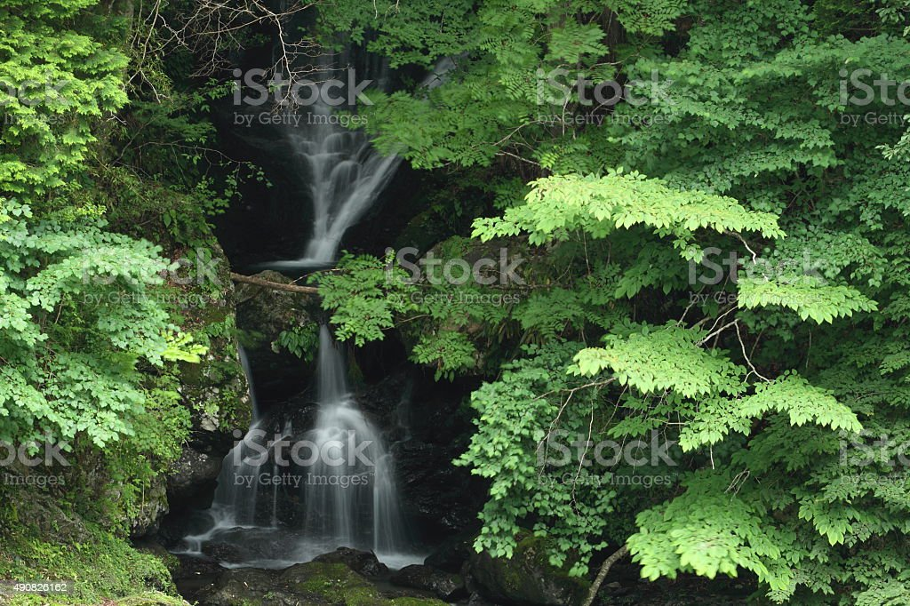 滝 ストックフォト