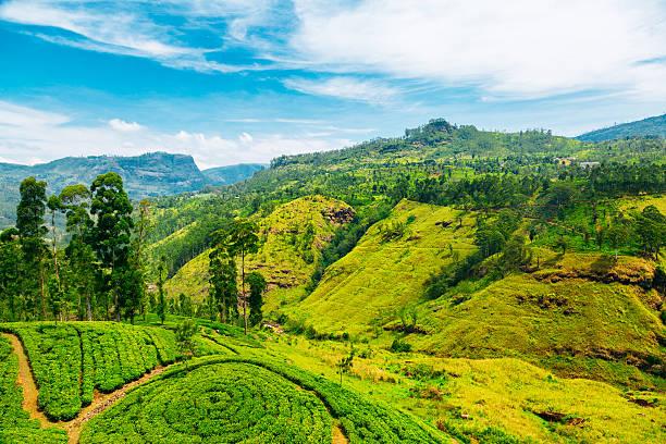 Waterfall valley near Nuwara Eliya, Sri Lanka stock photo