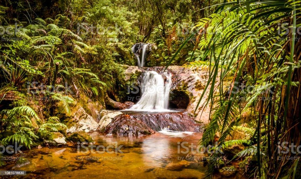 Waterfalls and hiking in Broken Hills tracks, Coromandel New Zealand stock photo
