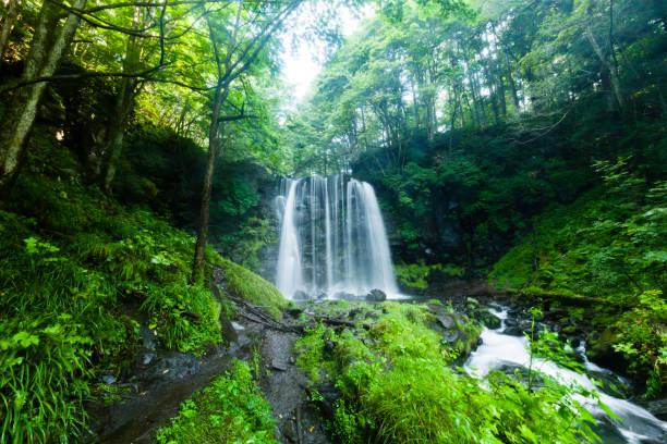 숲속의 폭포와 산의 개울 - 수돗물 뉴스 사진 이미지