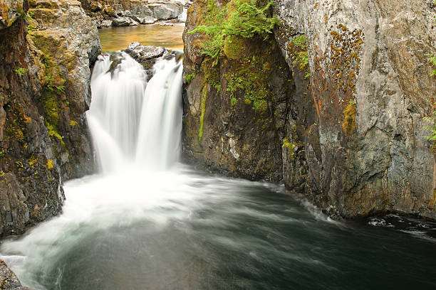 waterfalls of vancouver island - provincial park stock photos and pictures