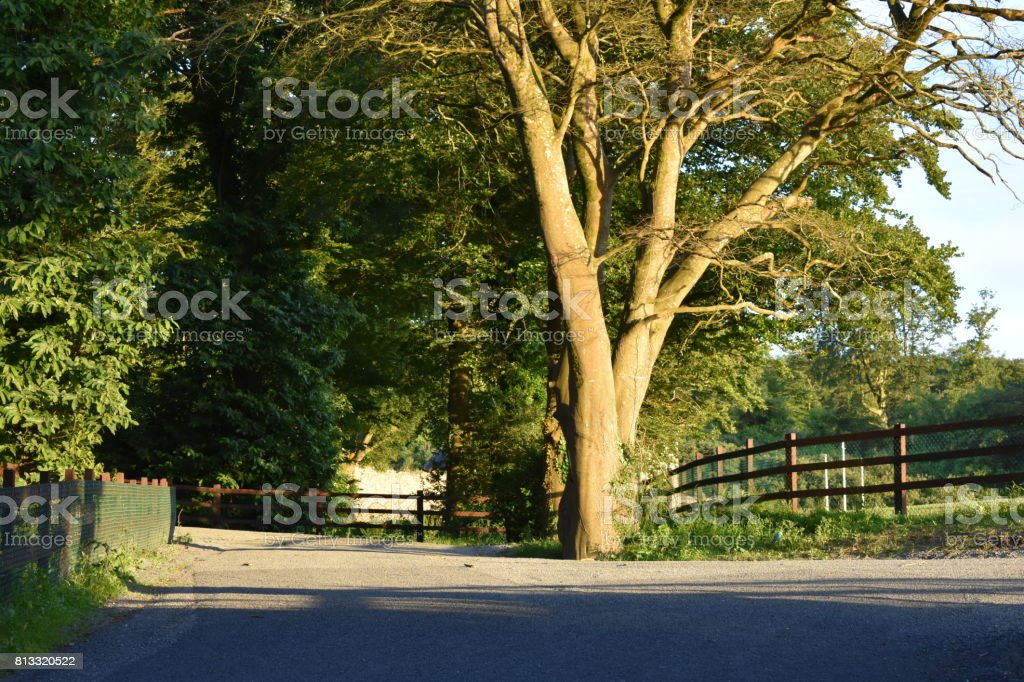 Waterford Greenway stock photo