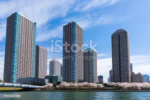 660303034 istock photo Waterfront and cherry blossom landscape5 1202457532