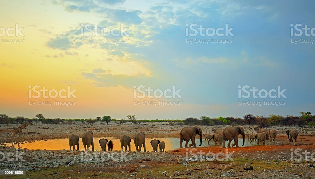 Waterhole at dusk with a herd of elephants stock photo
