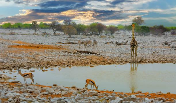 Wasserloch im Etosha National Park, mit Giraffen und Impalas – Foto