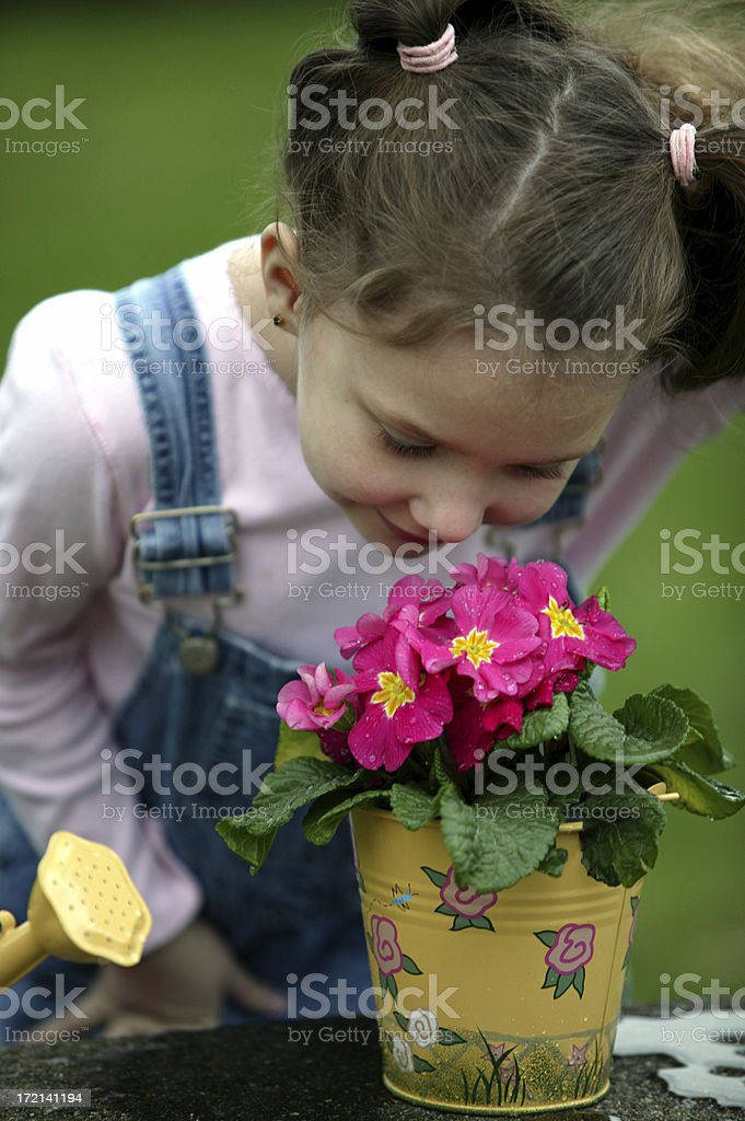 Watering 0014 royalty-free stock photo