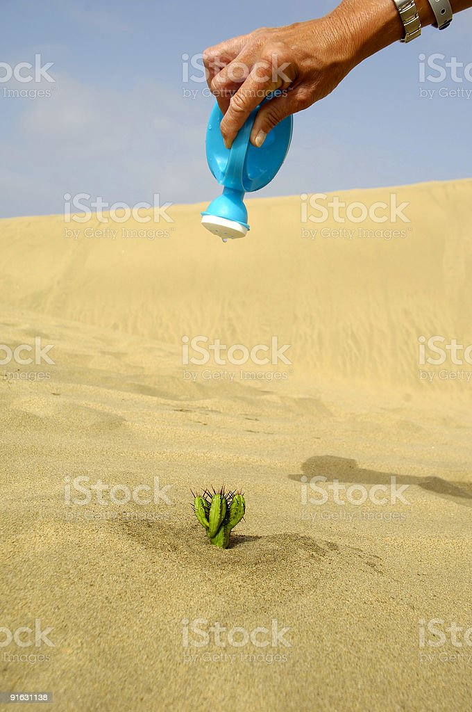 Watering a cactus royalty-free stock photo