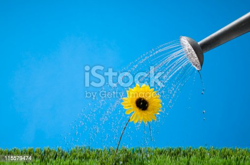 Metal watering can watering a yellow flower. Shot in the studio.