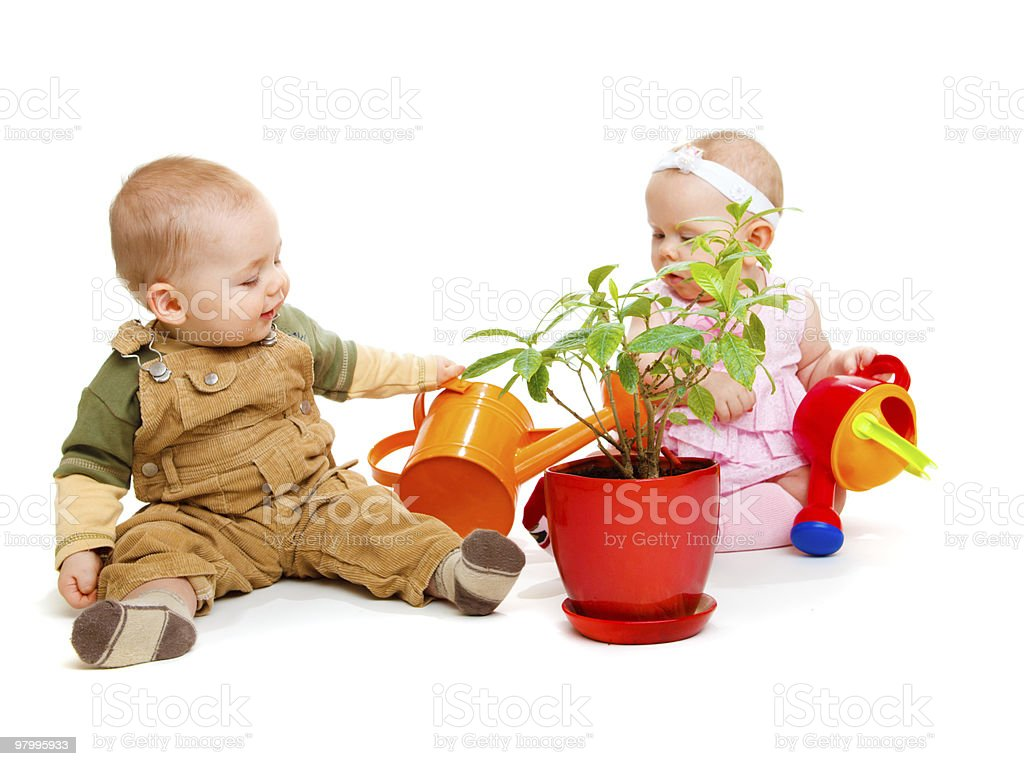 Watering a plant royalty free stockfoto