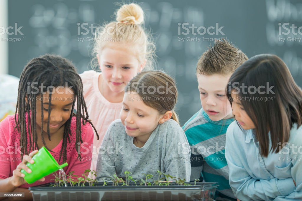 Watering a Small Garden with Friends stock photo