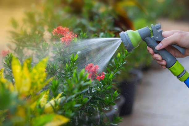 watering a tree at garden - watering stock pictures, royalty-free photos & images