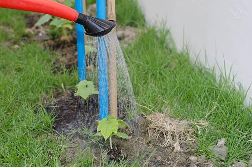915680272 istock photo Watering a tree 802255920