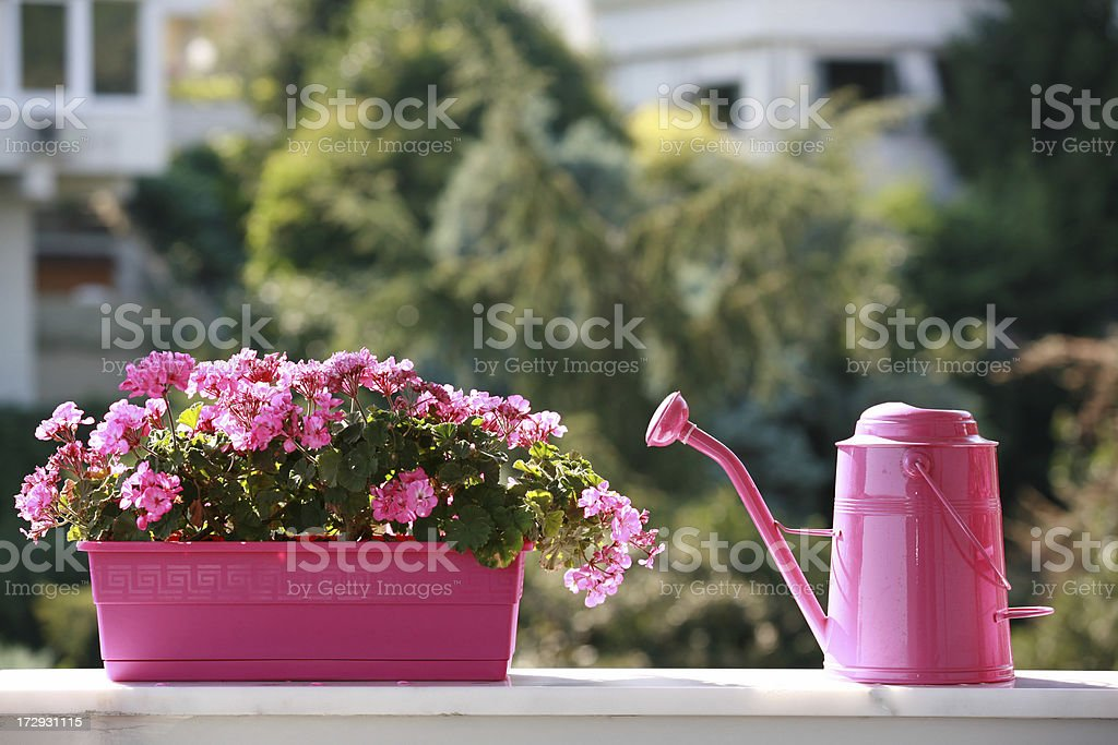 watering can and azalea flower stock photo