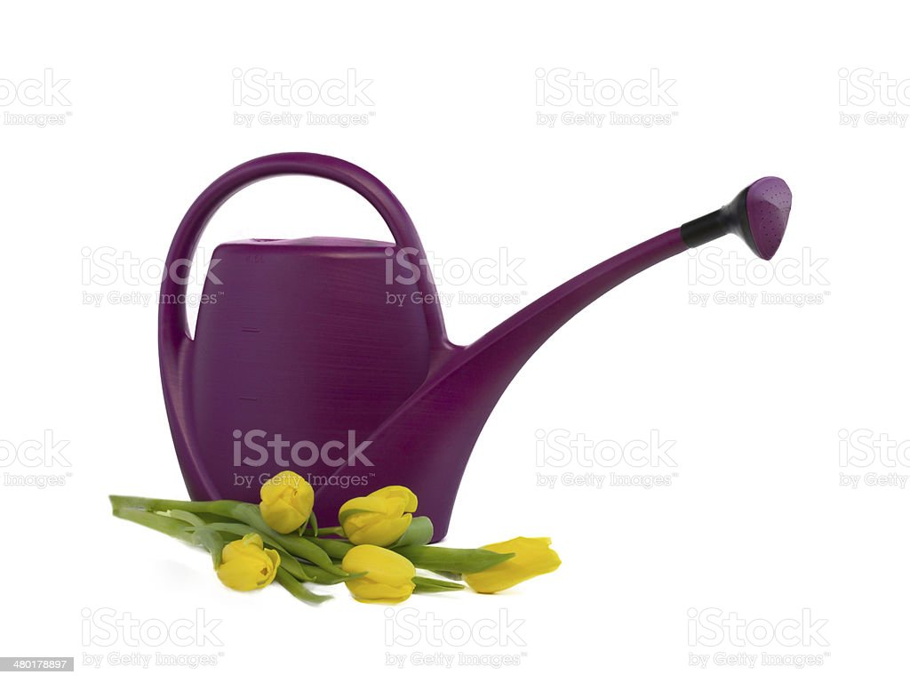 watering can and bouquet of yellow tulips stock photo