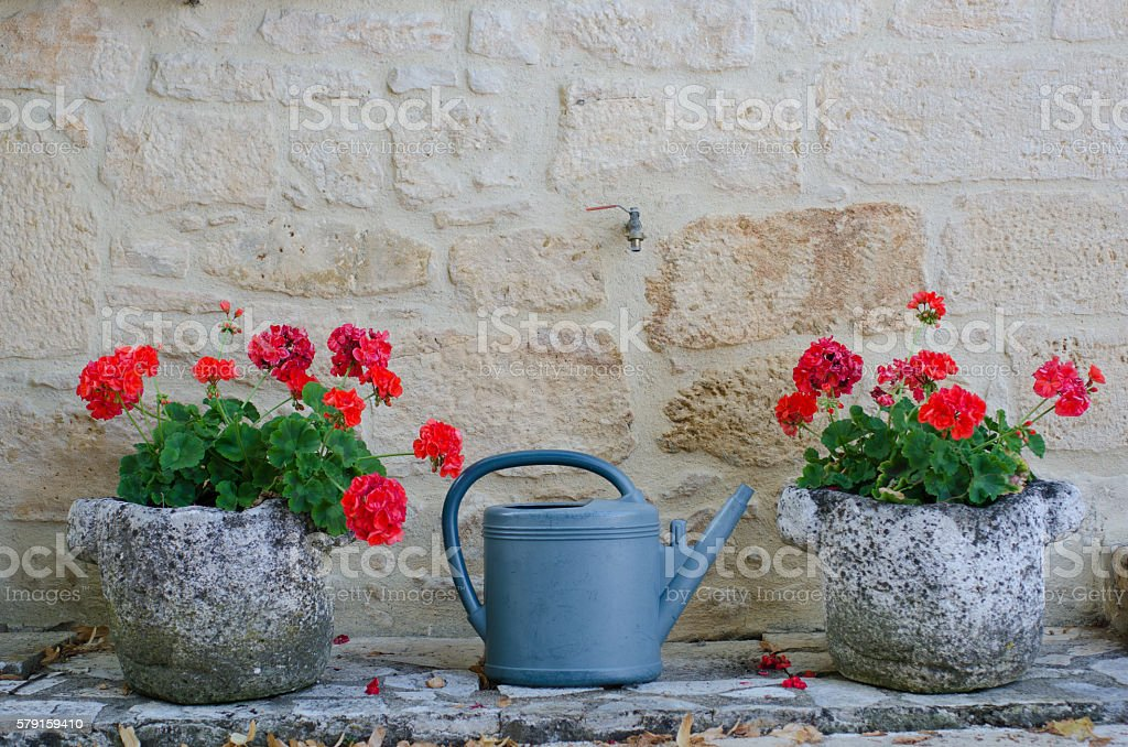 Watering can between two planters full of geraniums – Foto