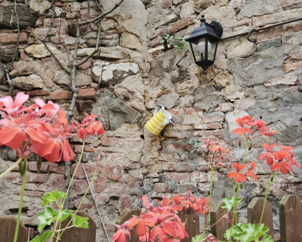 watering can hanging from a stone wall in the garden stock photo
