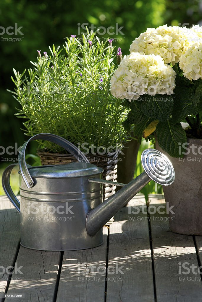 Watering can next to hydrangea. stock photo