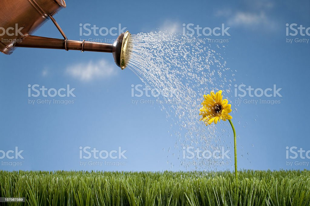 Watering Can Showering A Gerbera Daisy royalty-free stock photo
