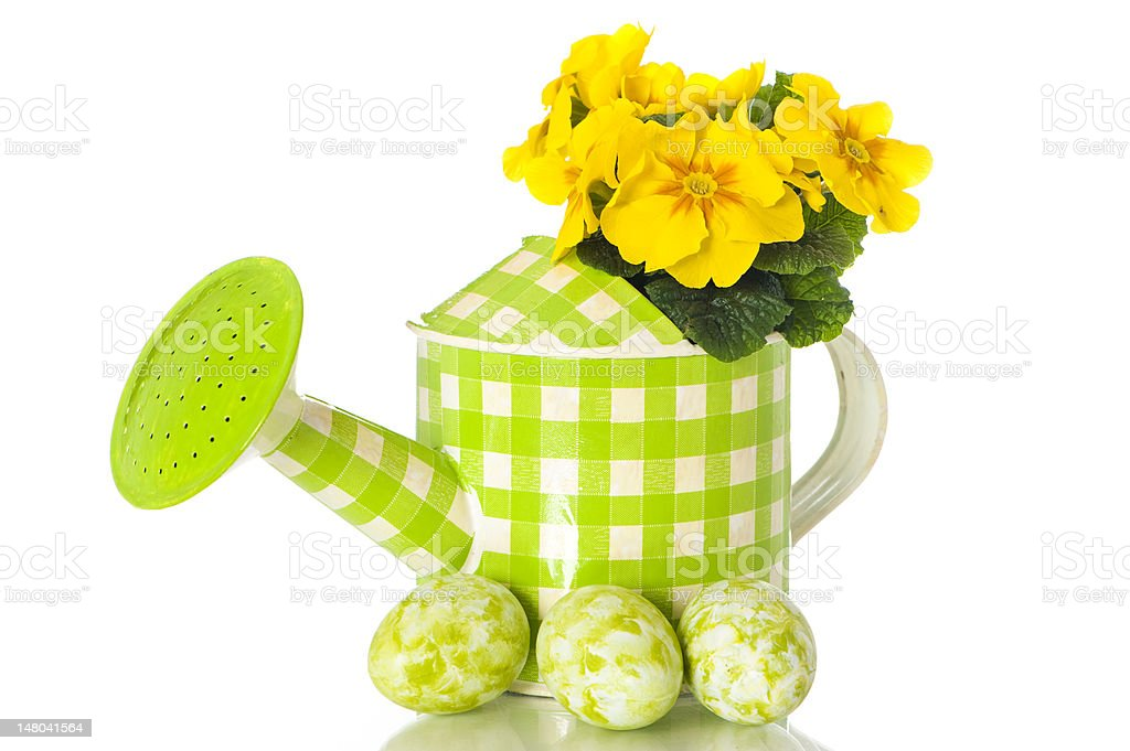 watering can with primrose royalty-free stock photo